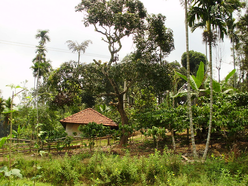 POLICY SERIES: global agroecological transitions to sustainable farming: India and Sri Lanka