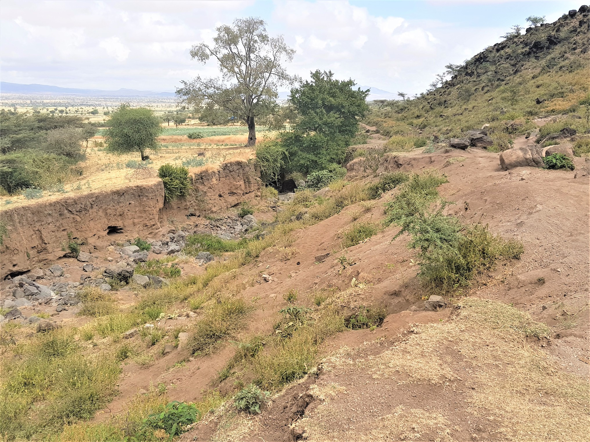 A gully forming in Boset District, Ethiopia. Photo: World Agroforestry/Endalkachew Woldemekel