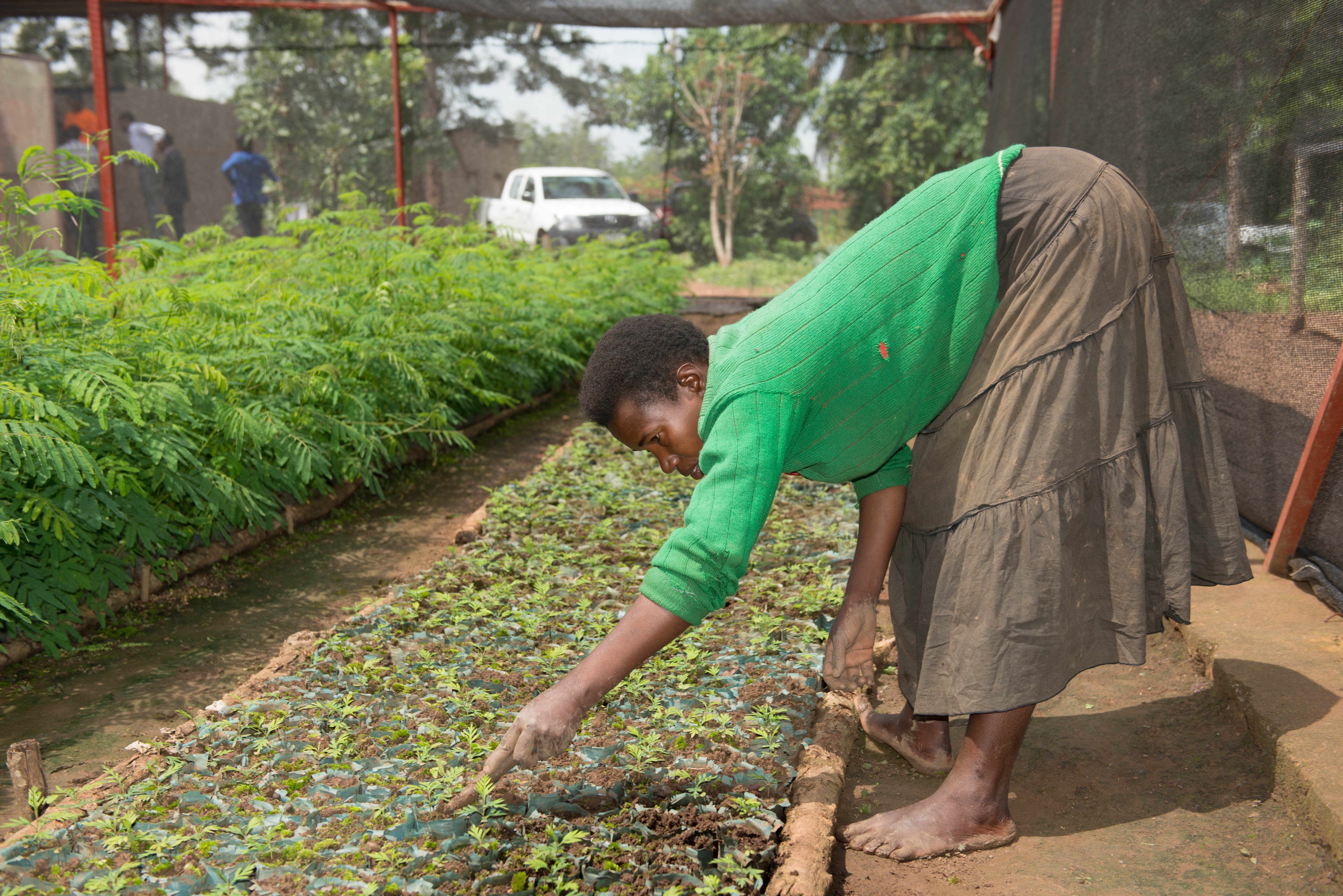 Farmers access quality seedlings and training in tree growing and management on farms from rural resource centres. Photo: World Agroforestry