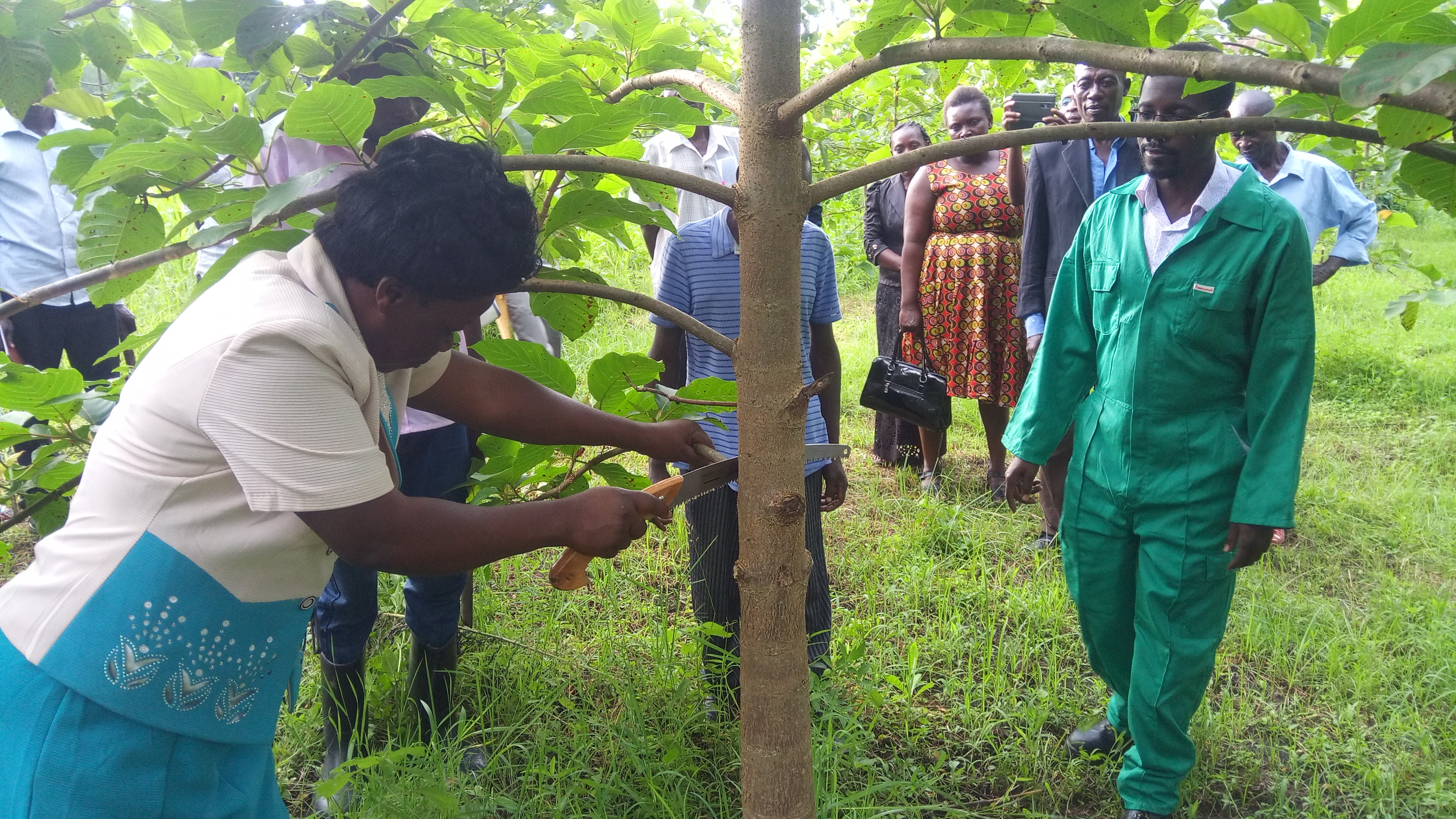 Practical session on proper pruning during one of the trainings for women and youth on agroforestry in Mount Elgon. Photo: National Forestry Resources Research Institute/ Charles Galabuzi