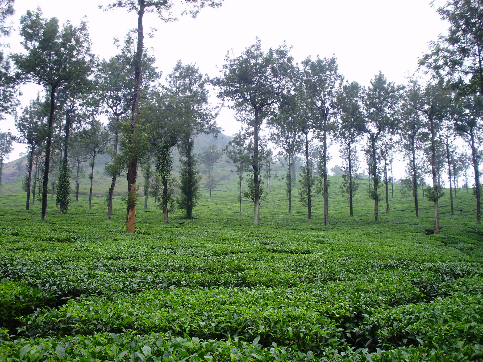 MEDIA RELEASE: Scientists map land suitable for agroforestry in South Asia