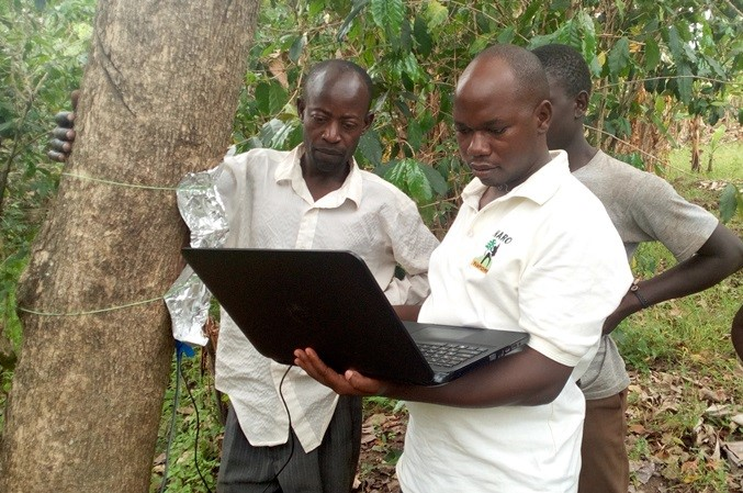 Understanding water-nutrients competition is important to inform decisions on suitability of specific trees on farm. Photo: World Agroforestry
