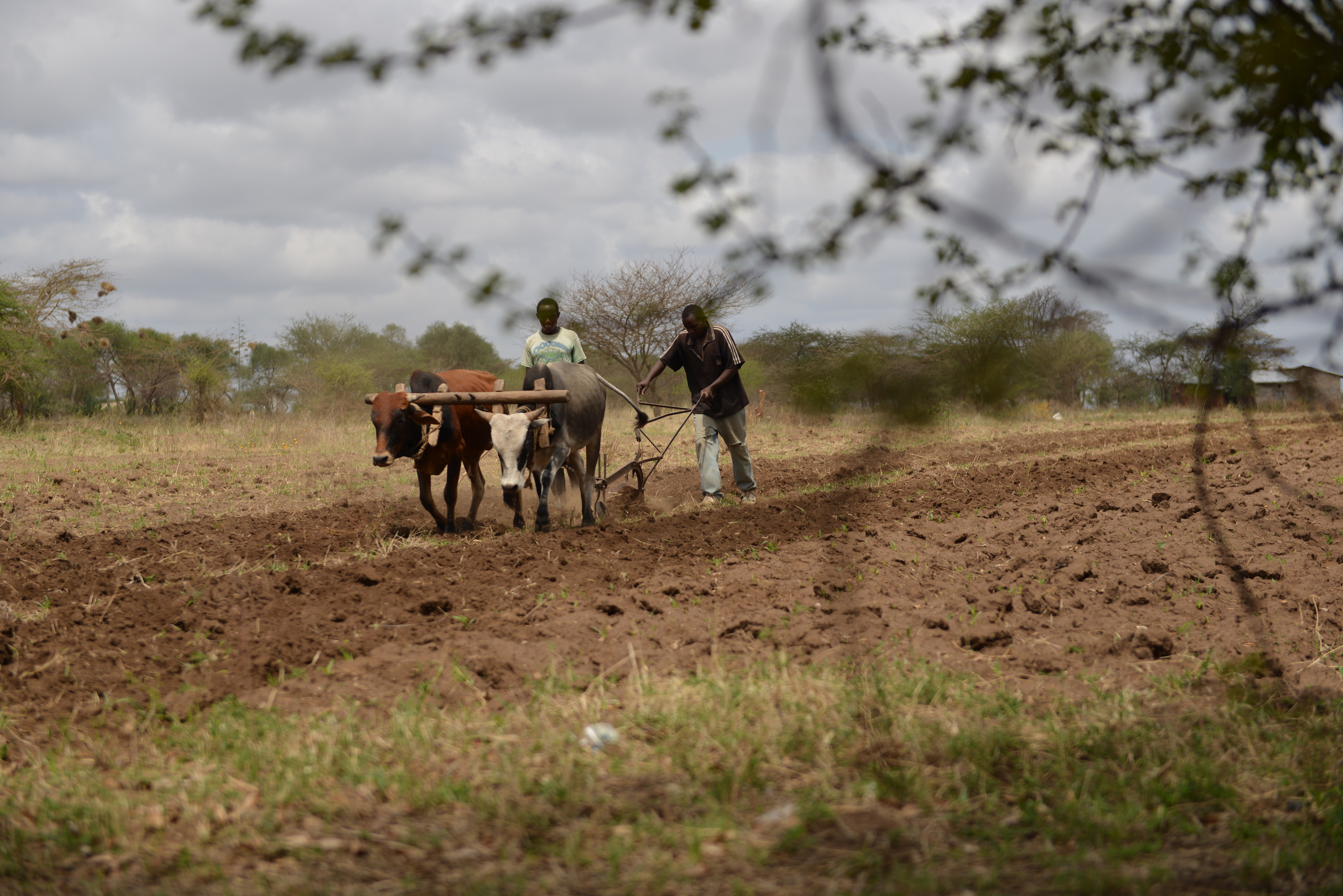 POLICY SERIES: global agroecological transitions to sustainable farming: Kenya