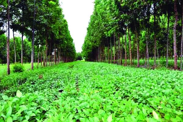 Agrosilvocultural system
