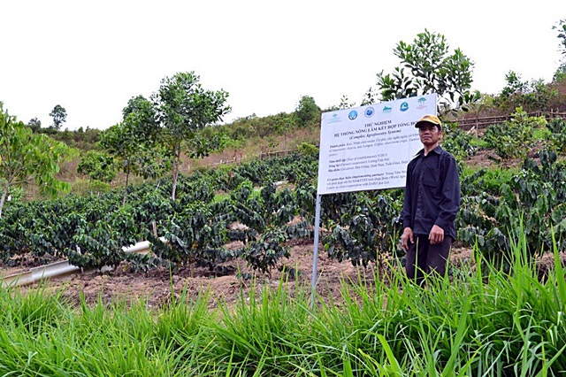 Agroforests set to replace monocrops in Northwest Viet Nam