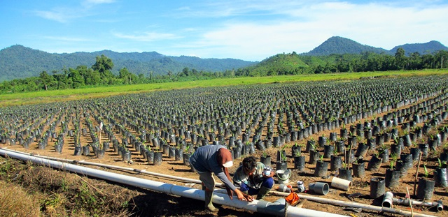 Indonesian agriculture isn't as 'green' as planned