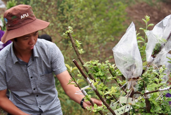 Viet Nam needs a tree-domestication strategy