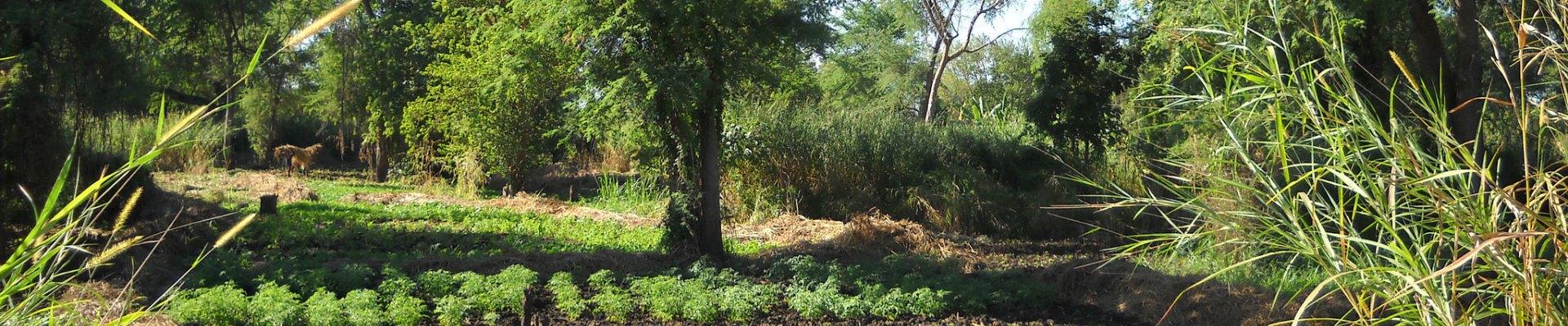 Provision of Adequate Tree Seed Portfolio in Ethiopia | World