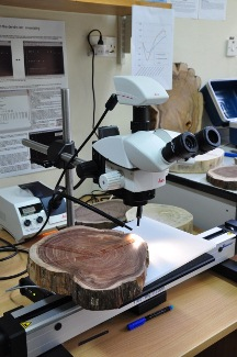 A Lintab<sup ></sup> TM  is used to measure tree rings with high precision