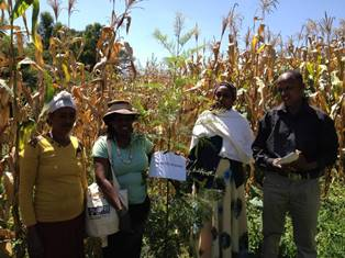 Development agent tours one of the TFS project participatory trials