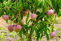 Invitations for Expressions of Interest for Hosting World Congress on Agroforestry in 2019 (WCA2019)