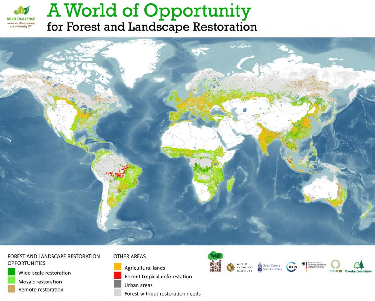 The global agroforestry challenge