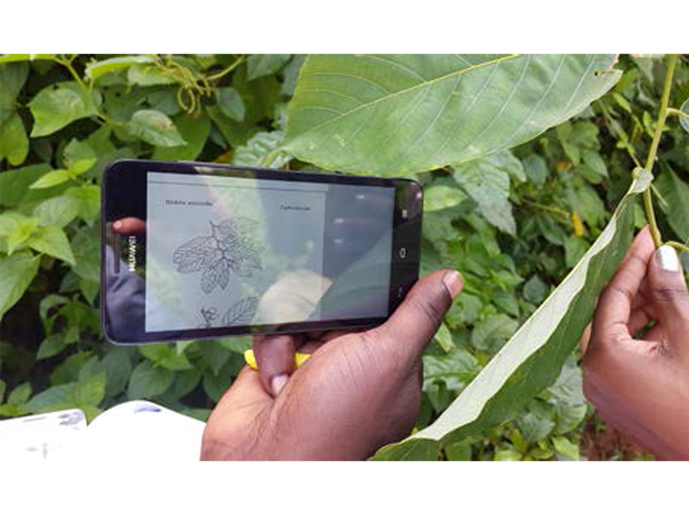 The right tree for the right place: vegetationmap4africa v2 includes smartphone app