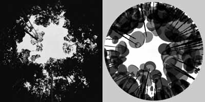A set of hemispherical photograph was used to test the model predictions. Left picture was taken by camera and right picture was generated by SLIM at same ... & SLIM: Simple Light Interception Model | World Agroforestry Centre