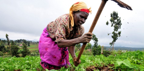 The right policies for African agriculture